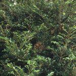 スズメバチの巣を駆除 ミーシャンズファミリーの夏の陣