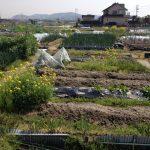 畑の掃除!農業の1/3は草取り⁈
